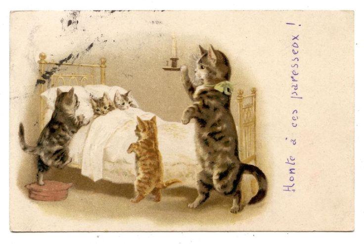 CATS.CHATS.KATZE.
