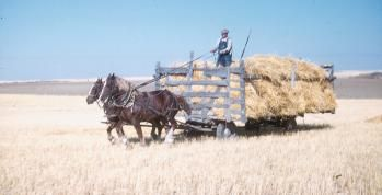 I know some people who remember farming like this. From the Encyclopedia of Saskatchewan