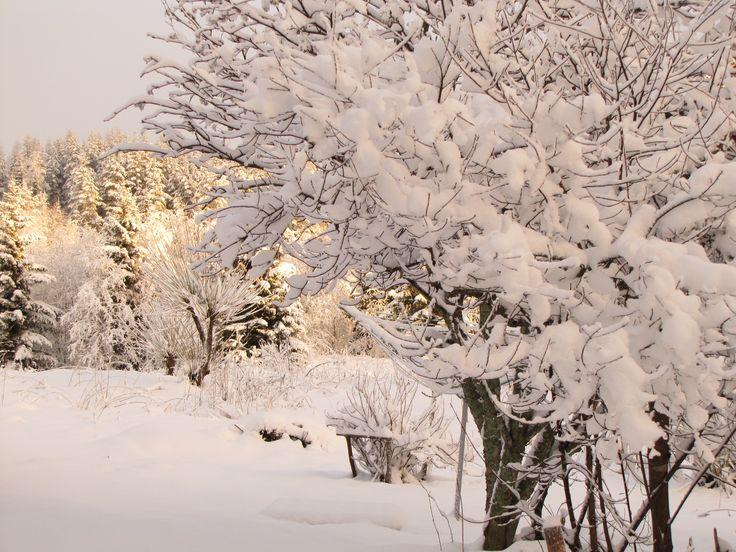 Talven kauneutta