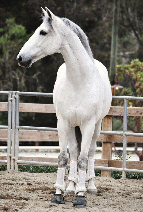 equine-hourglass:    Shamelessly reblogging again.. so gorgeous