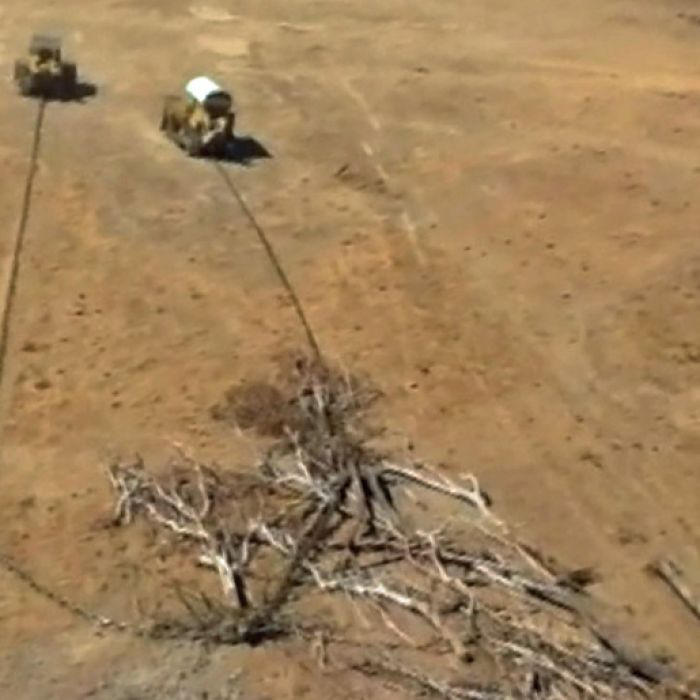 Leaked figures obtained by the ABC show land clearing in Queensland last year at about 278,000 hectares — triple the 2009 figure.