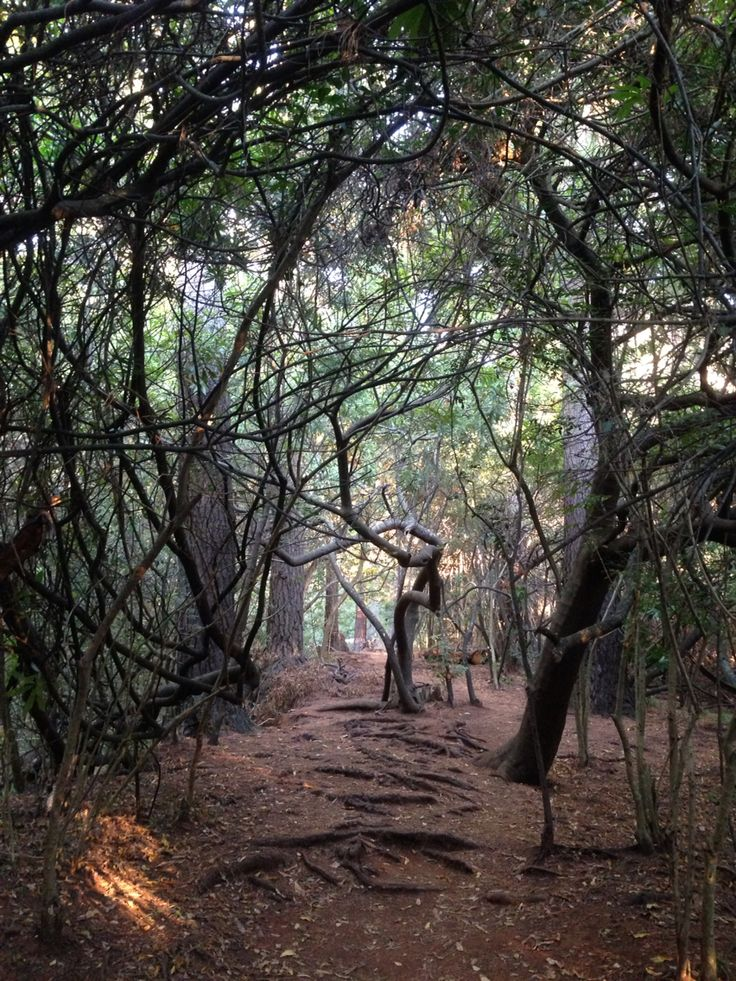 #ForestMagic  on the slopes of #TableMountain Early Morning,  Newlands Forest, #CapeTown, South Africa