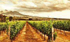 II Cumbre Internacional del Vino, Jornada de puertas abiertas en Finca La Estacada, 14 de marzo #enoturismo #Tarancón #Cuenca http://goo.gl/tfpFx3