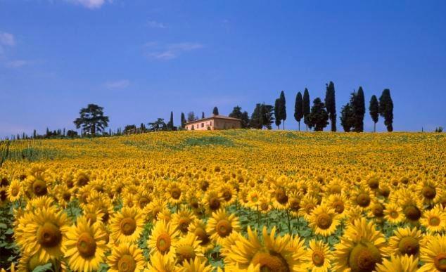 """Amazing Tuscany - Scopri gli angoli più belli della Toscana.  www.facebook.com/AmazingTuscany    Metti """"Mi Piace"""" e condividi le foto con gli amici."""