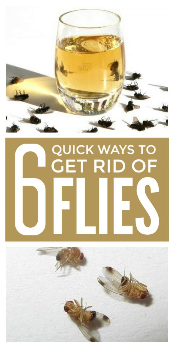 How to get rid of flies in the house with white vinegar