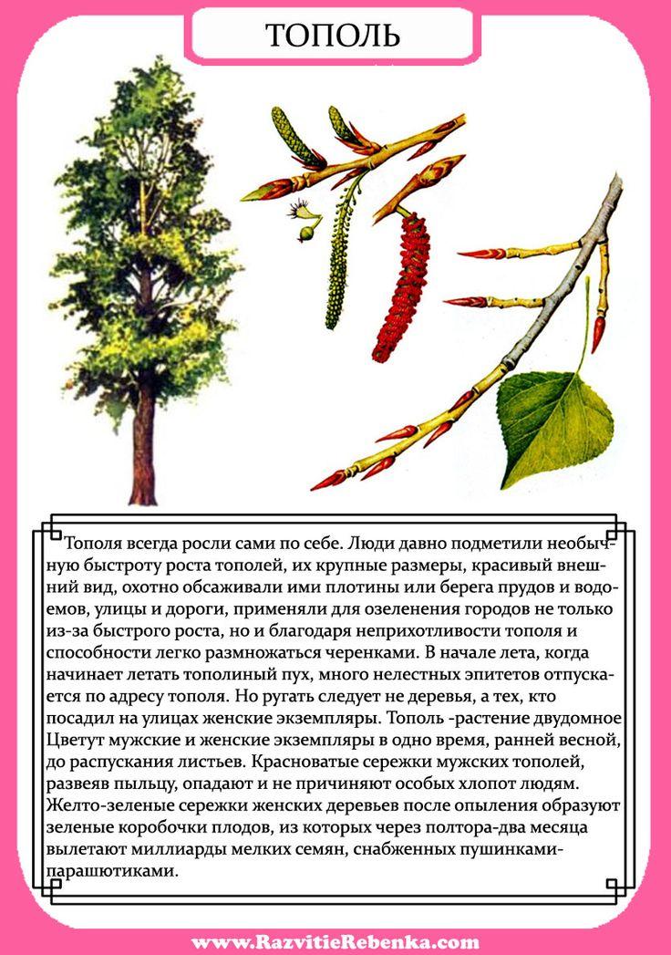 при рассказ о дереве с картинками обозримом будущем экзоатлет