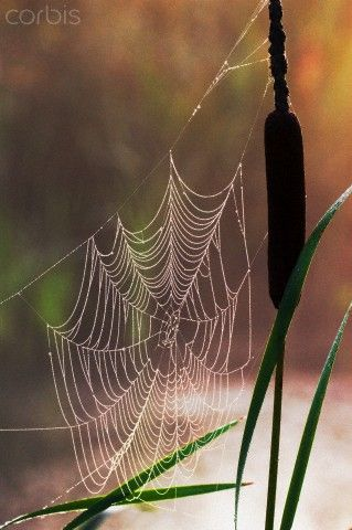 Great combination - cat-tails and spider webs