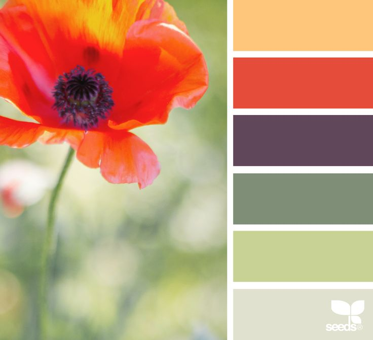 06.20.16 { color garden } image via: @tangledgarden