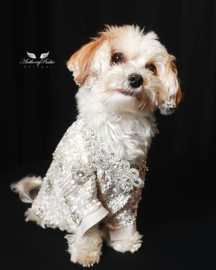 Internationally acclaimed Pet Couturier Anthony Rubio ...