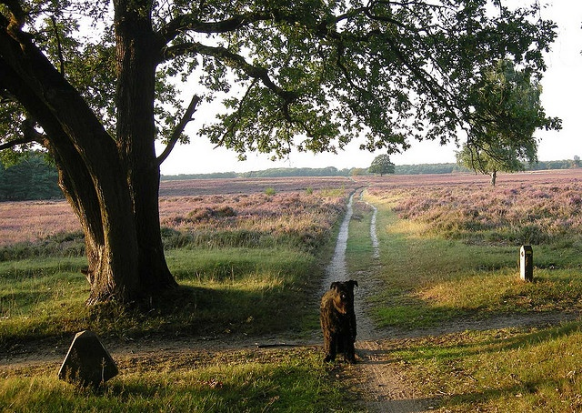 Bussumse heide, many footsteps...