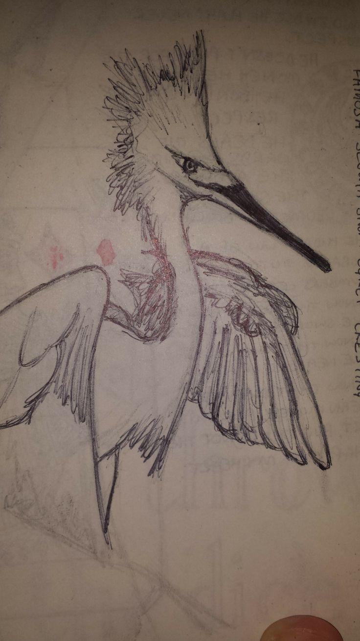 American bird (pen).