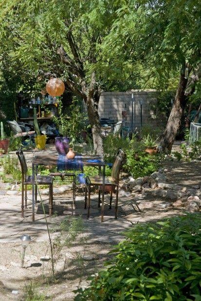 Natives Thrive In Tucson Summer Garden.
