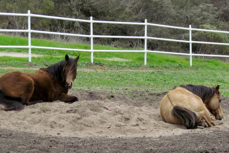 paddock paradise: sand area for rolling and napping