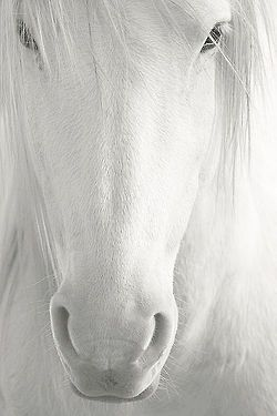 White horse ✿⊱╮ .....re-pinned by Maurie Daboux