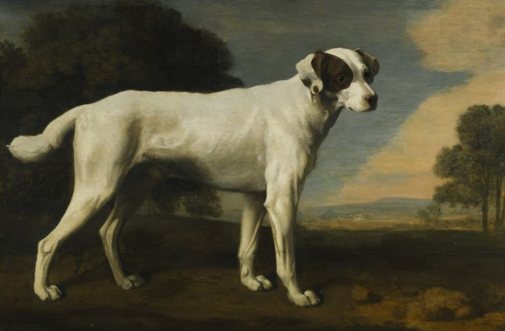 George Stubbs Portrait of a white dog, the property of Lord Gormanston and later owned by Lord Beaverbrook.