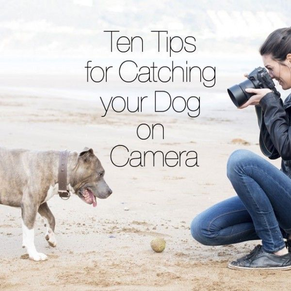 Ten Tips for Catching Your Dog on Camera | #WOOFipedia by The American Kennel Club #WOOF