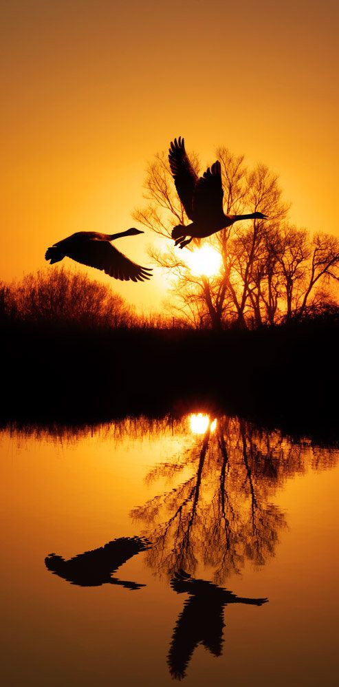 Flight at sunset