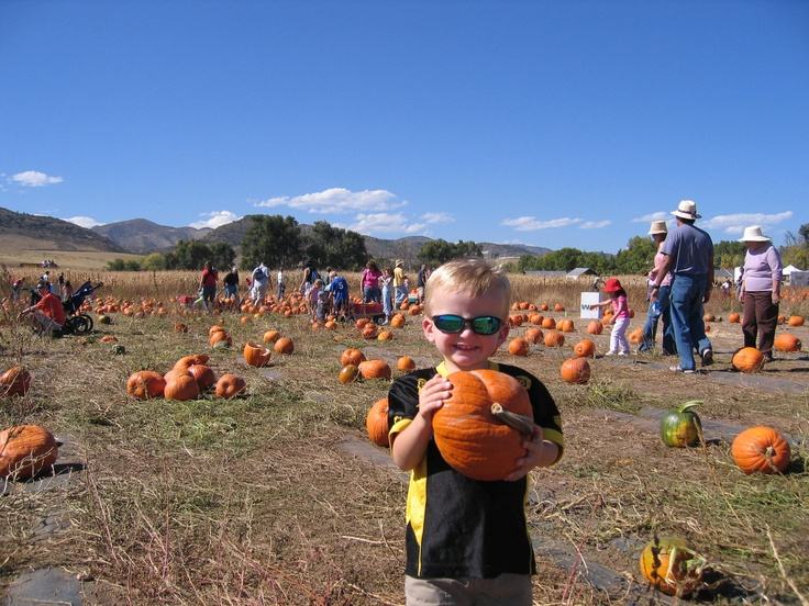 Denver Pumpkin Patch Chatfield