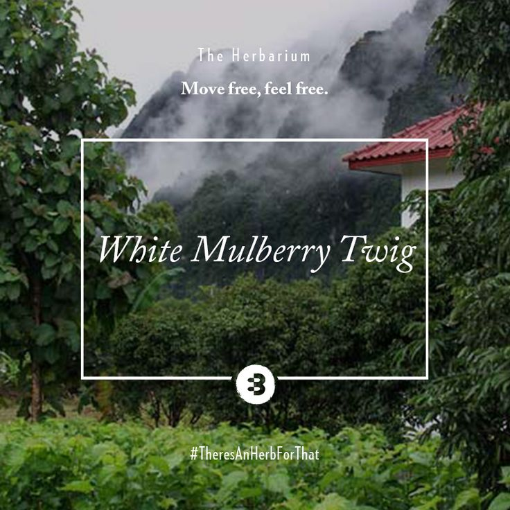 We could jump for joy - it's time for our #Joint #Support #Herbarium featuring all the anti-immflatory power of the White #Mulberry #twig (or sang zhi if you like).  Reknowned for its excellent healing properties on #rheumatic #arthralgia, it'll soothe #aching joints and put you on the right foot to getting fit.