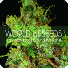 Northern Light X Skunk - strain - World of Seeds | Cannapedia