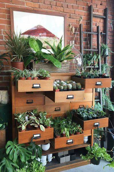 Plant on display