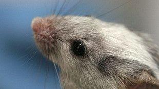 Blog de la UPV sobre novedades en genética. http://www.ehu.eus/ehusfera/genetica/
