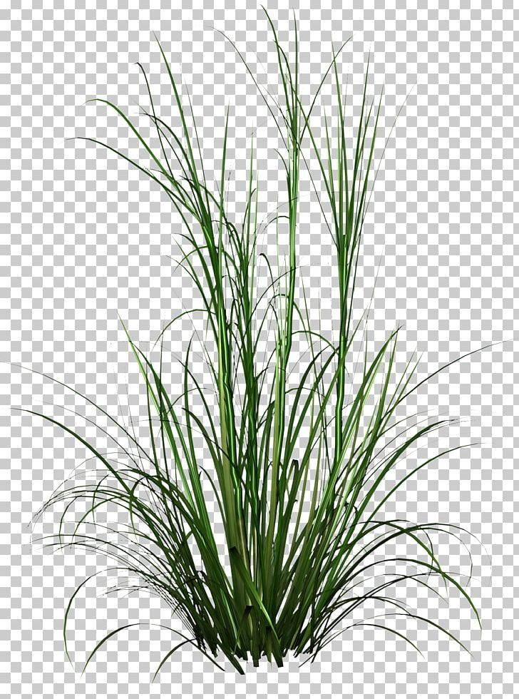 Tall Grass Hd Photo Png Chrysopogon Zizanioides Commodity Computer Icons Download Encapsul In 2021 Grass Photoshop Best Background Images Android Wallpaper Black