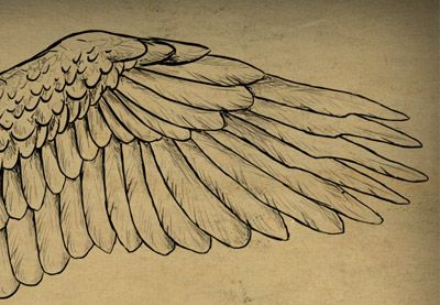 Hay unas cuantas cosas que todo artista debe ser capaz de dibujar, con las alas siendo definitivamente una de ellas. En este tutorial te mostraré como las alas de aves y dragones son...