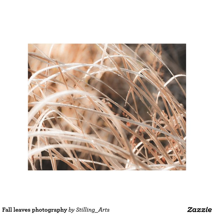 Fall leaves photography gallery wrapped canvas