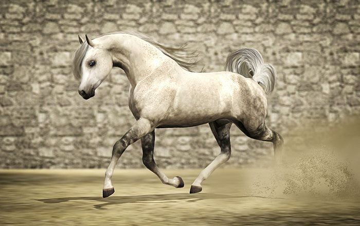 This is a beautiful grey Arabian sims 3 horse!!
