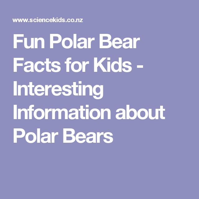 Fun Polar Bear Facts for Kids - Interesting Information about Polar Bears