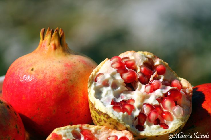 Melograna - Pomegranate    Salento    @saittole www.masseriasaittole.it
