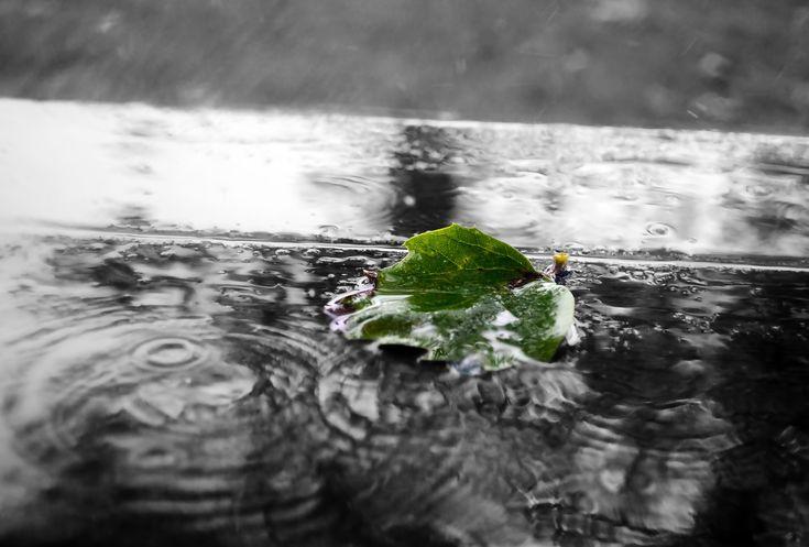 Размышления под дождём