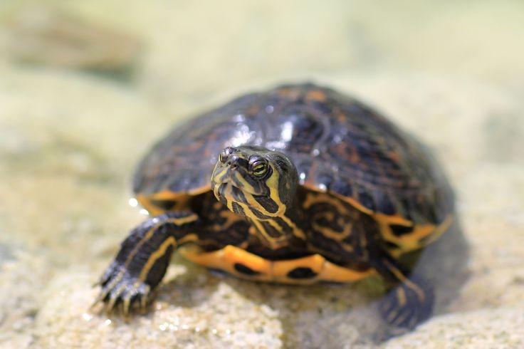 Turtle in Marbella