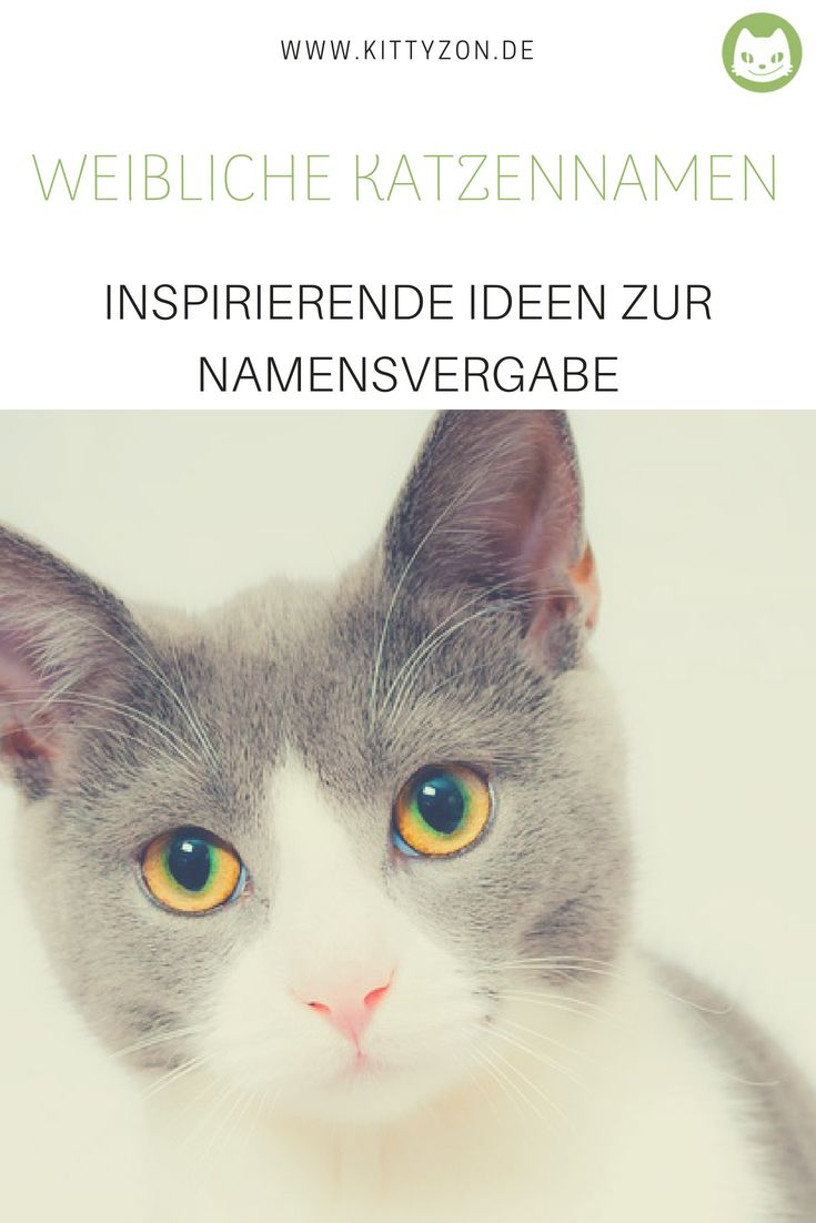 Weibliche Katzennamen Inspiration Fur Die Namensgebung Katzen