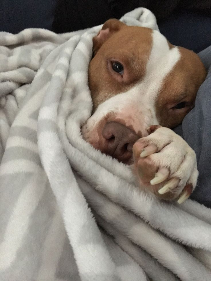 But I don't wanna go outside ... (x-post Pitbulls) http://ift.tt/2jHsPns