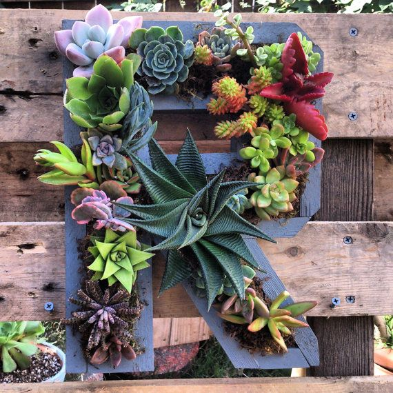 Letters Garden: 12 Best Succulent Alphabet Letter Boxes Images On