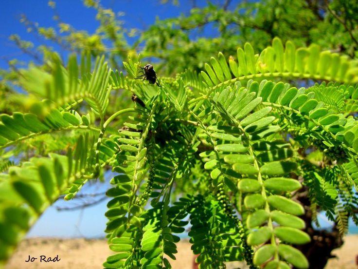 Happy Fly :) Failaka Island. Photo: Jo Rad