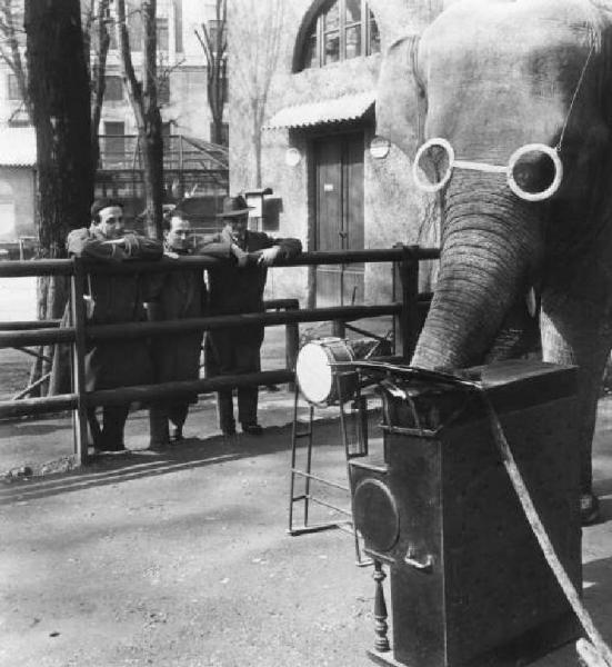 Elefante ai giardini pubblici