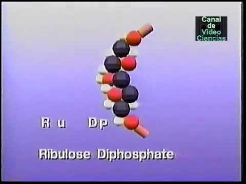 Mira que llamarle fase oscura de la fotosíntesis, con lo bien que se ve... #anabolismo