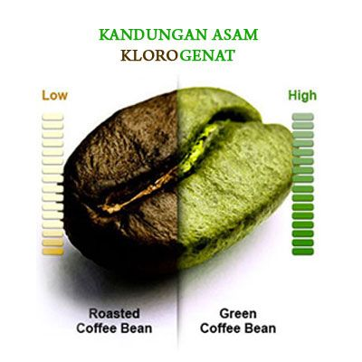Apa Itu Green Coffee Bean ?