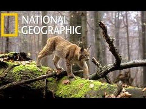 Wild Balkan HD National Geographic Documentary - YouTube