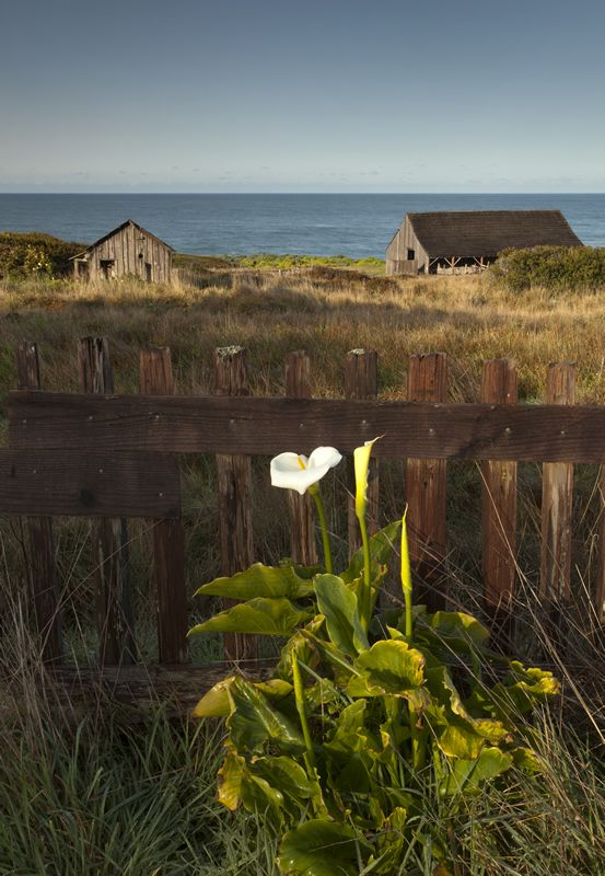 You Have Just Found The Perfect Place For Your Vacation World Renowned Sea Ranch California Whether Are Planning A Family