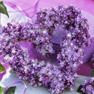 would love Lilacs heart as a photo prop (instead of ampersand) because Paul picked me purple flowers during our courtship