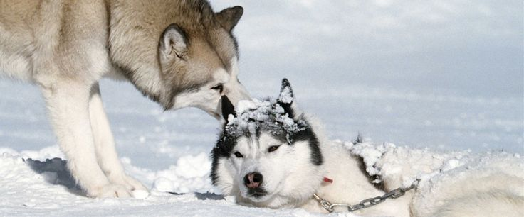 Names Of Sled Dogs On Zero Below