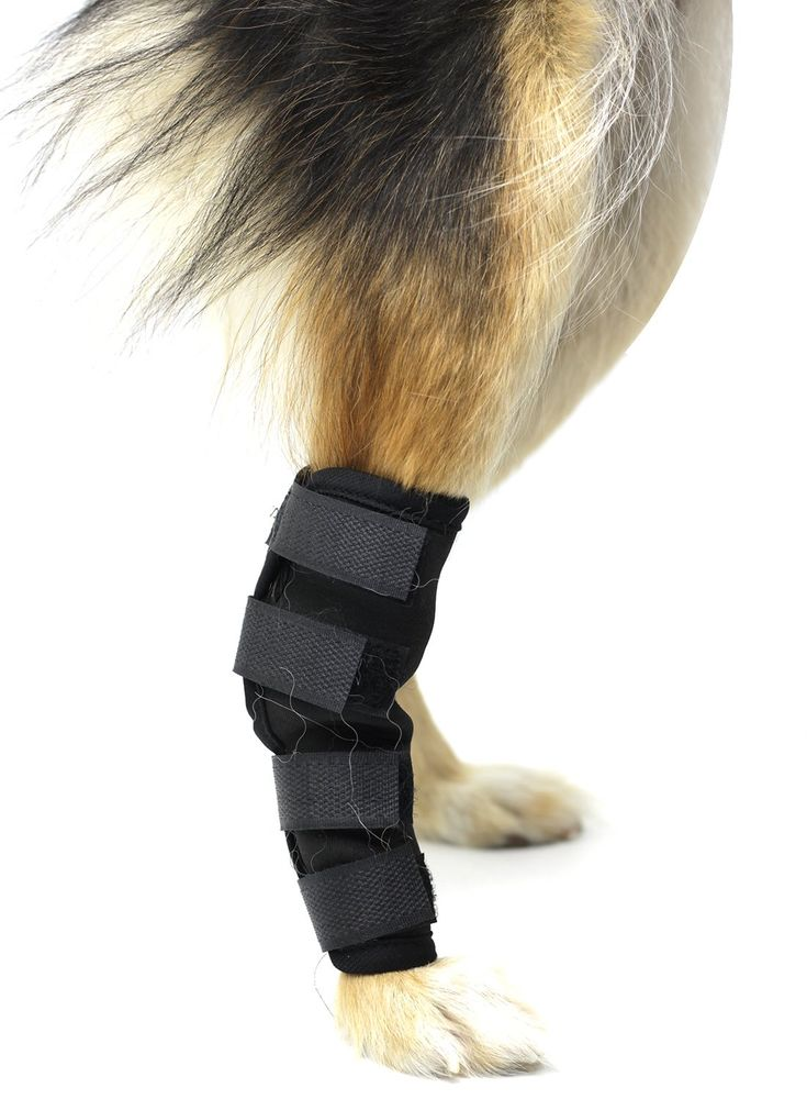 Park Art|My WordPress Blog_How To Wrap A Dogs Sprained Foot