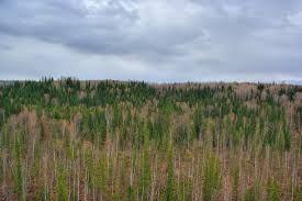 File:Taiga in Zalesovskiy raion of Altai region 02.jpg