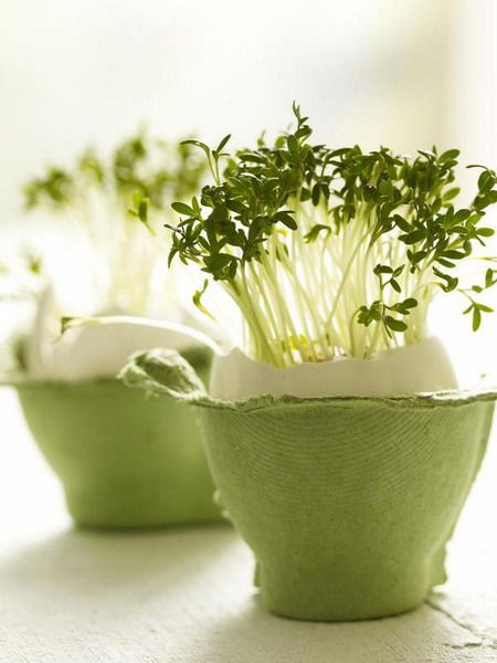 Sprouts of spring grass grown in an egg shell.