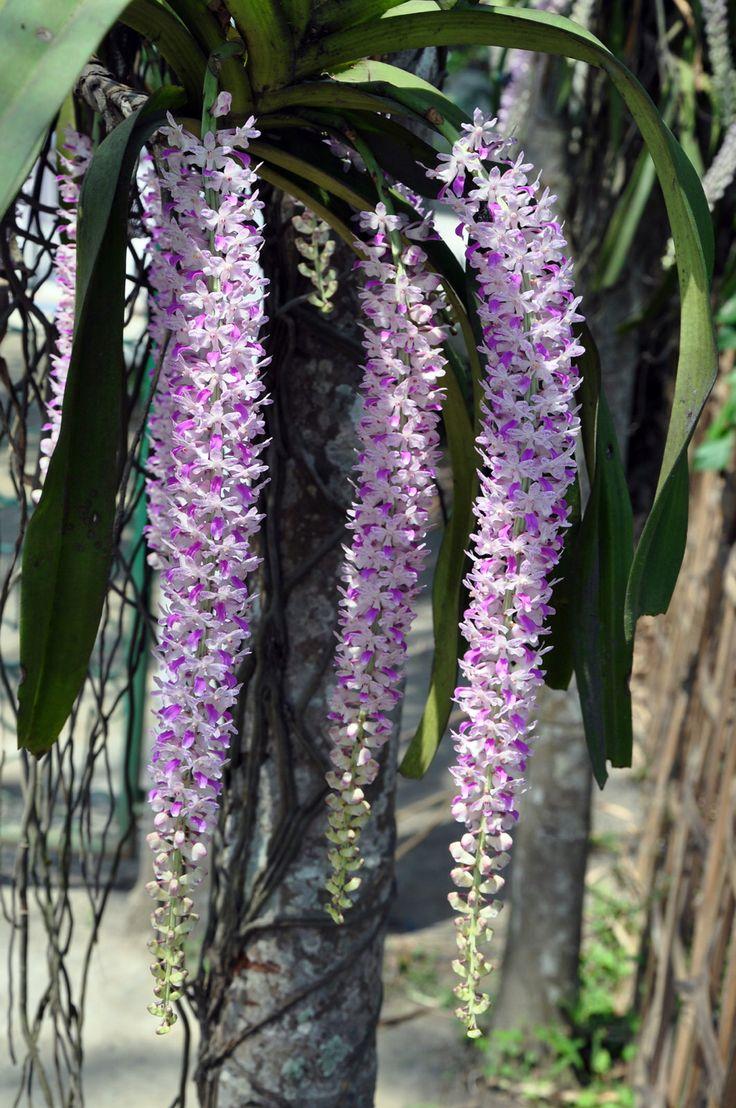3600 best unusual plants  u0026 flowers images on pinterest