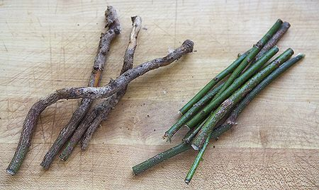 homemade root beer syrup sassafras twigs roots homemade root beer ...